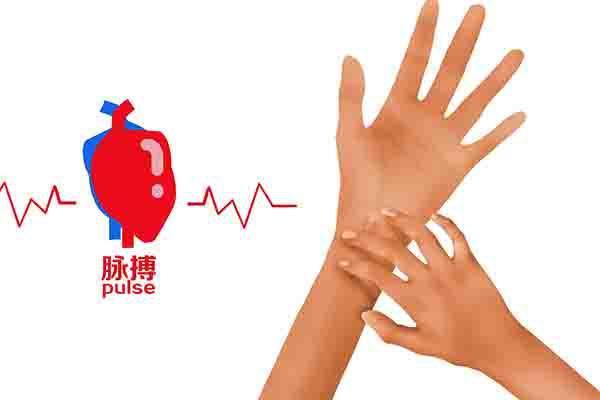 心率快慢和什么有关?
